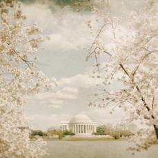 Washington DC Jefferson Memorial.jpg