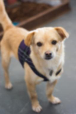 Julia dog design animal hope.png