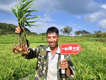 Ideia da Semana: Conectar Fazenda com Pessoas