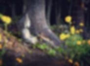 Nature Buddha Small_edited.jpg