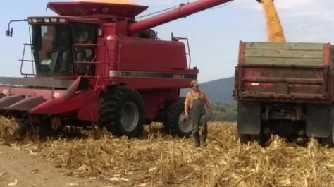 harvesting 3.jpg