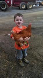 catching chicken.jpg