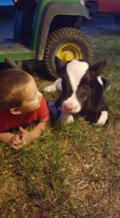 emmit and calf.jpg