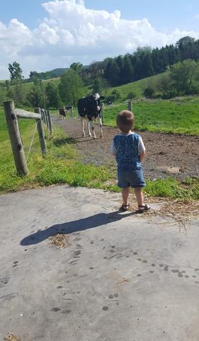 emmit pasture.jpg