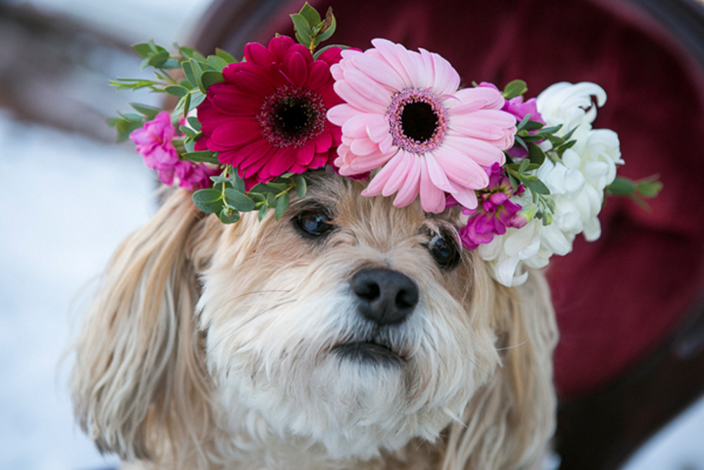 dog with flower crown