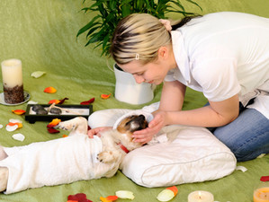 Dog Massage a How To Guide