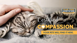 Cover-Certified-Compassion-Cat.jpg