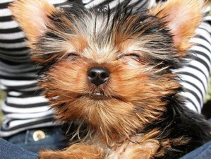 Essentially Happy! 6basic rules for EO's and pets