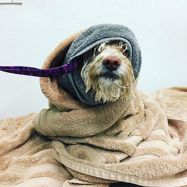 Bath & Brush Out Dog PRIVATE