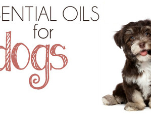 Using Essential Oils with Canines. A how to guide