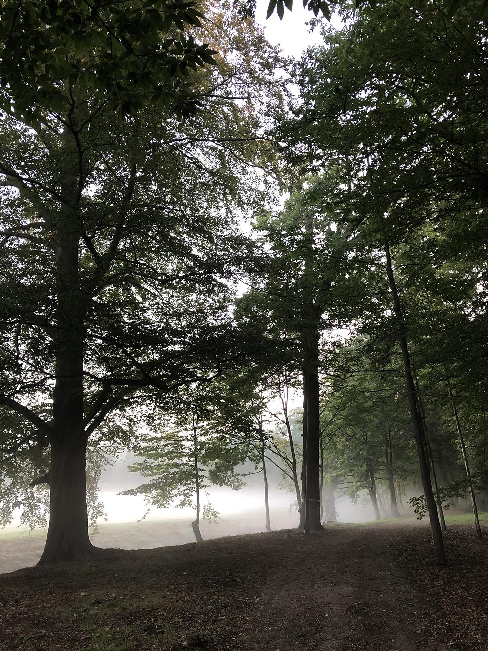 Early morning at Hof ter Laken Belgium
