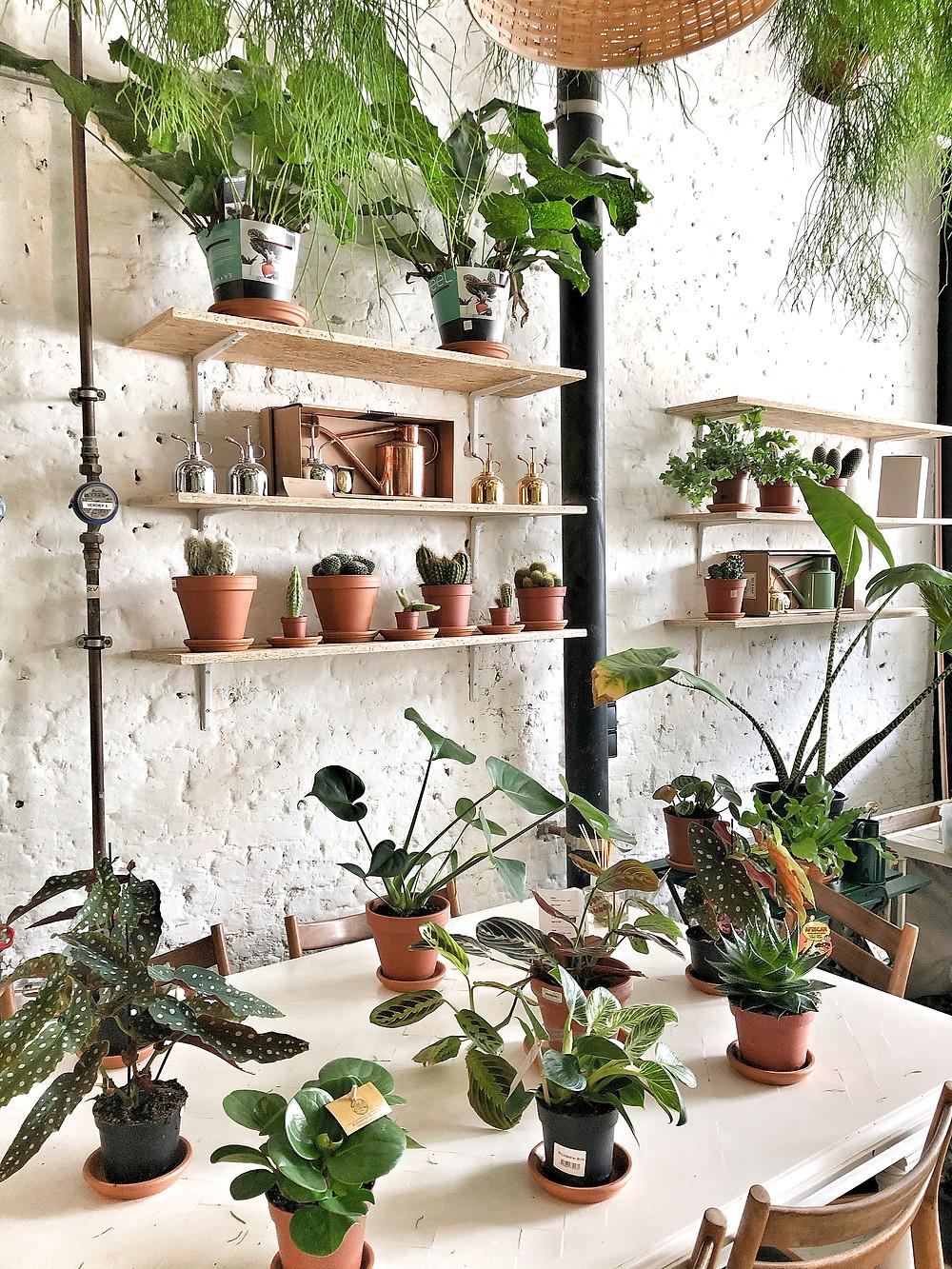Green Garage Antwerp, plants