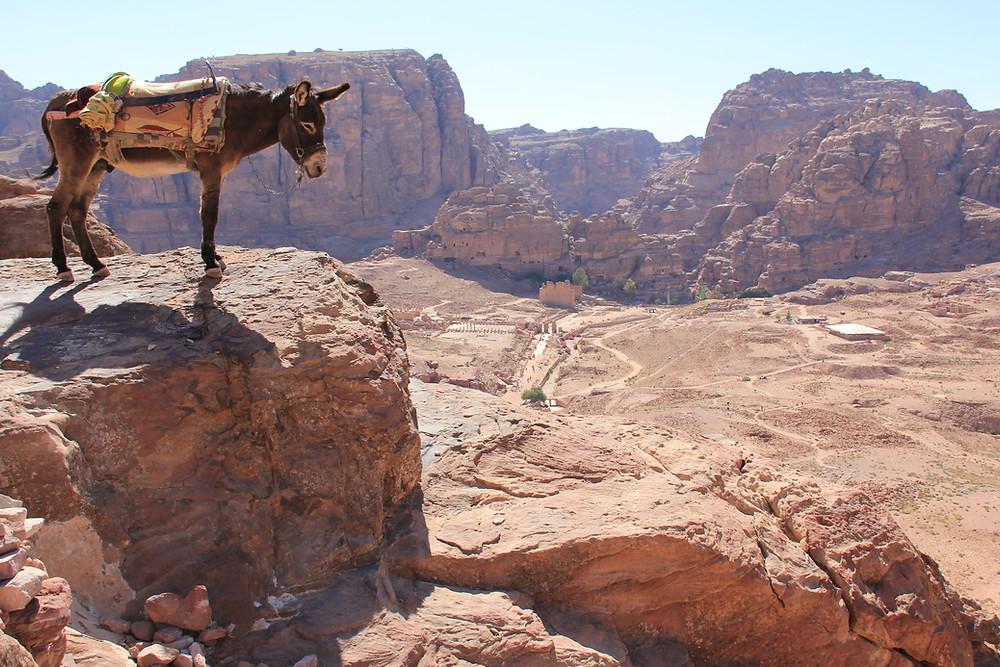 Donkey in Petra Jordan
