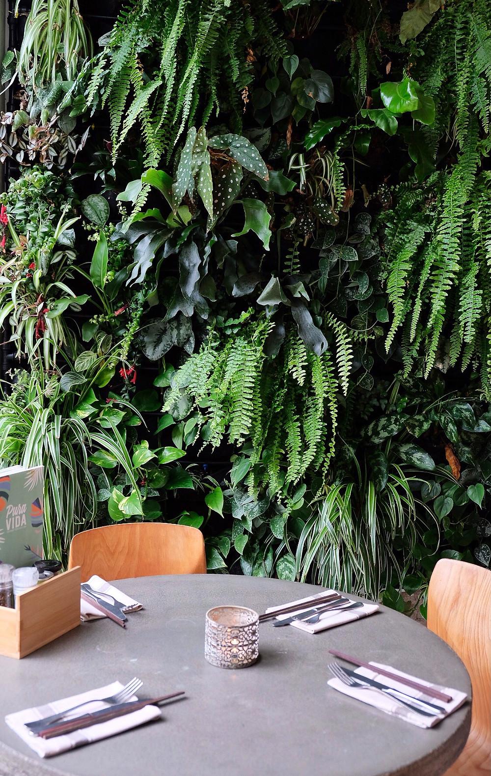 Green wall at 'Pura Vida Foodbar' Midsland Terschelling