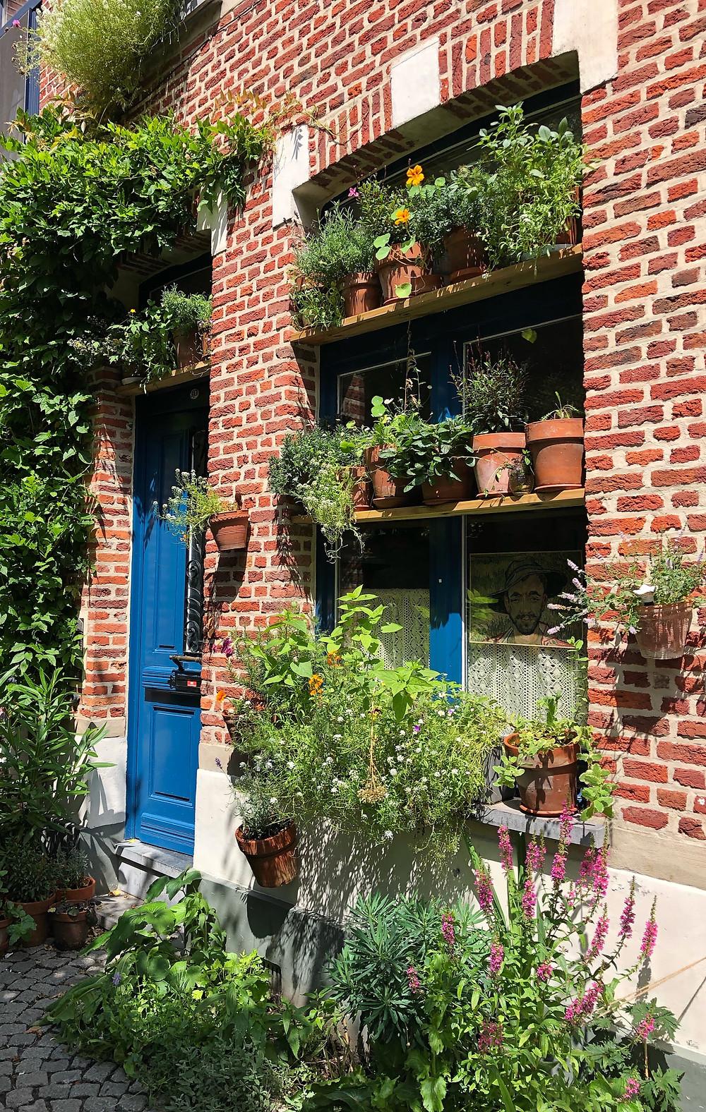 Plants in Beguinage Mechelen