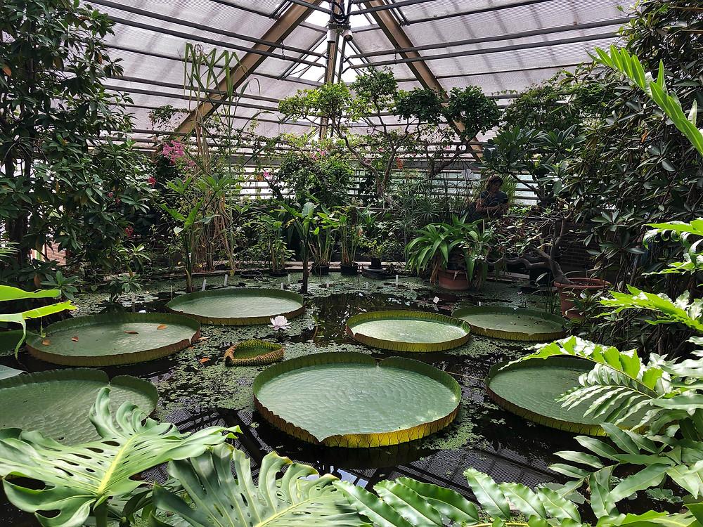 Victoria greenhouse at Hortus Botanicus in Leiden