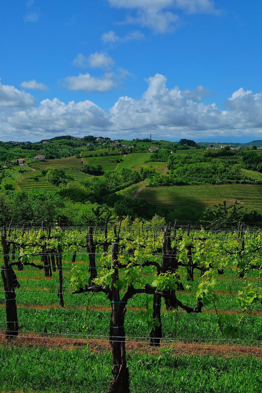 Brda Wine Region, Slovenia