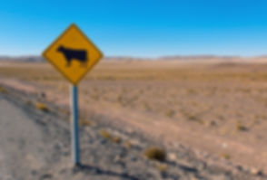 cow-sign-in-the-andes-PCDBG77.jpg