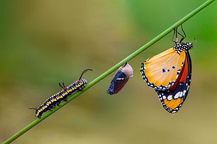 Differing stages of life from caterpilla