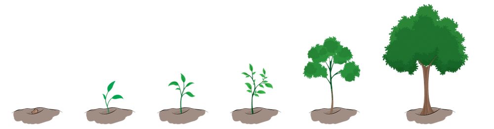 Tree Growing (from: https://bonseyeonline.com/craft-living-brand/ )