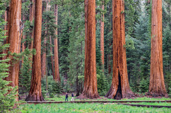 giant-tree-trail-sequoia-national-park