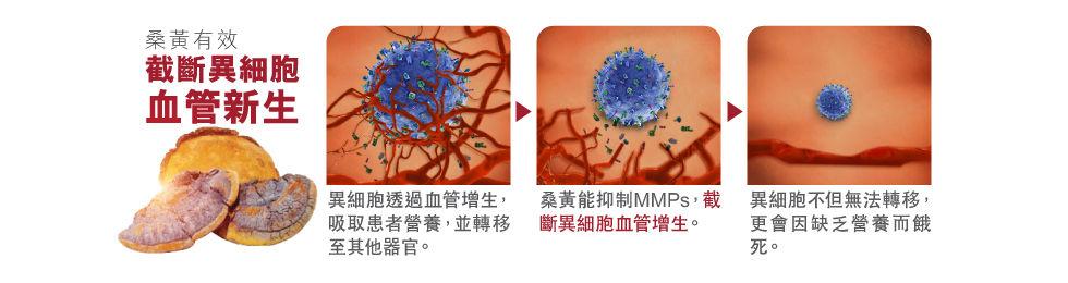 桑黃截斷異細胞血管新生