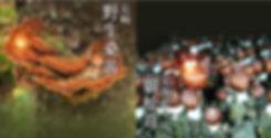 桑黃,化電療副作用,白血球,癌症,抗癌,癌症治療,化療,電療,化電療,增加白血球,極長崎野生桑黃,kiwami,免疫力,癌症凋亡,癌症復發,癌症轉移,癌症系列,癌症末期,癌症飲食,化療飲食,化療副作用,化療營養品,癌症營養品,化療保健品,癌症保健