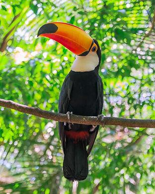 Parque-Nacional-Iguazu-Cataratas-del-Iguazu-2.jpg