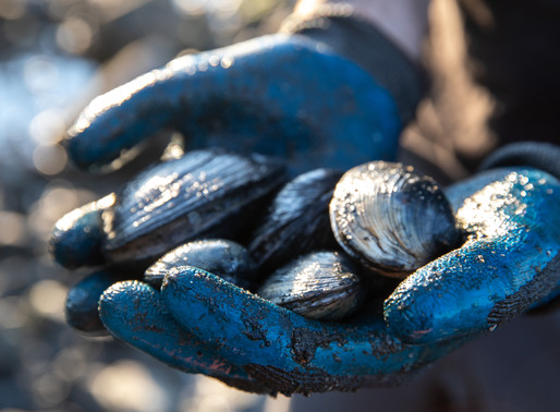 Marvelous Mollusks; Mussels and Clams