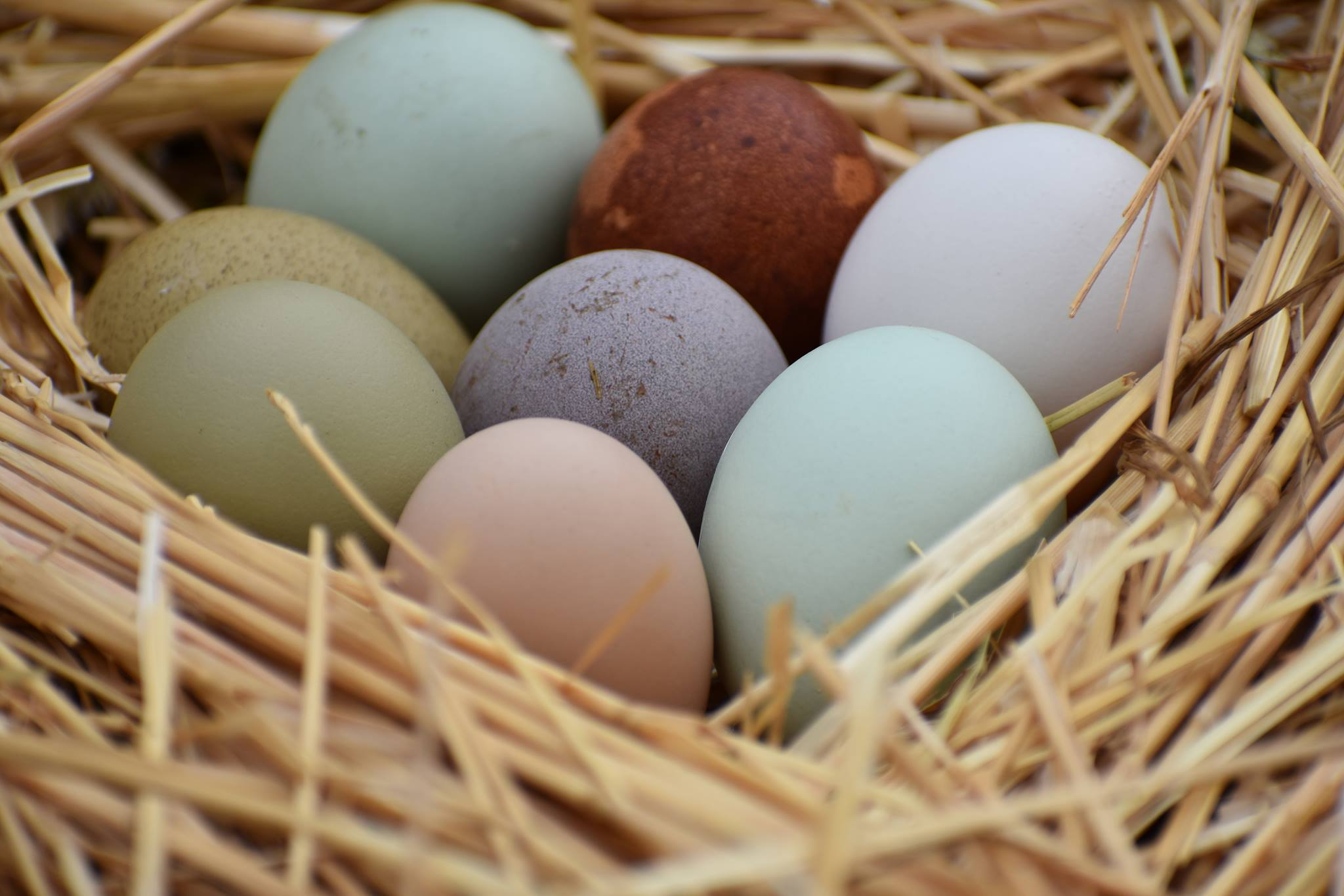 Natural Colored Eggs.jpg