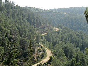 Aminadav Forest