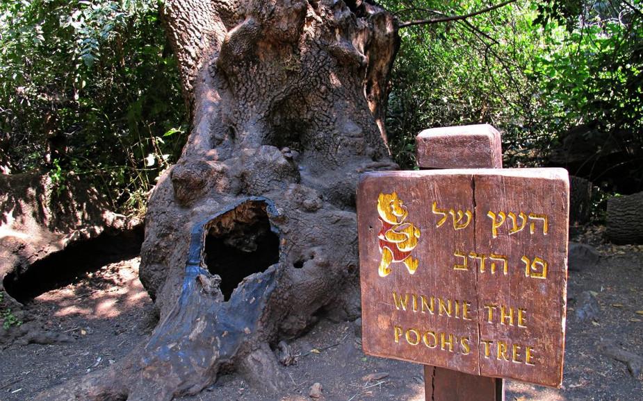 Winnie The Pooh's tree