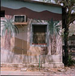 Wall Mural Palmtrees