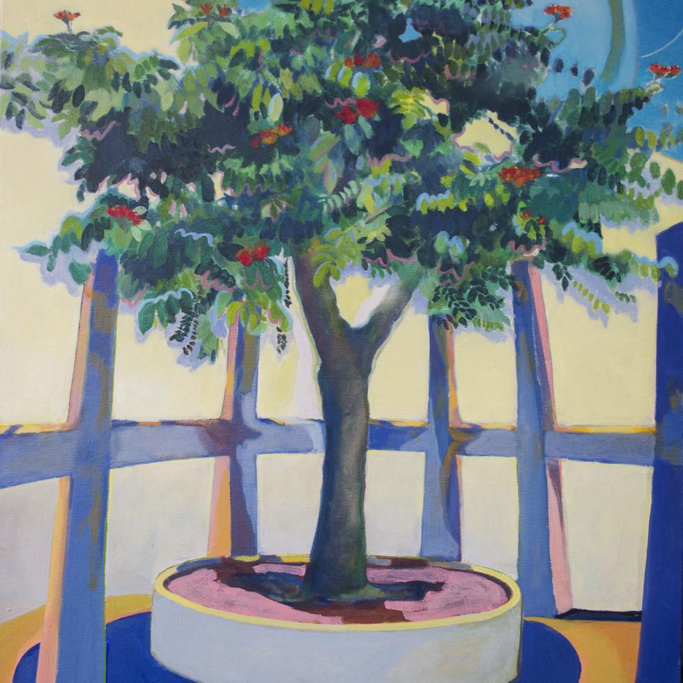 The School Tree