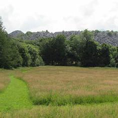 Meadow imagine Y Tomen.jpg