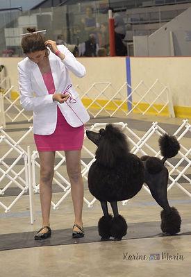 Élevage AMH - Caniche & Bedlington Terrier enregistré au Club Canin Canadien