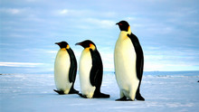 Protected zones in Antarctic seas could throw lifeline to penguins