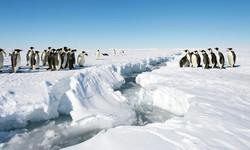 Penguins - Divided