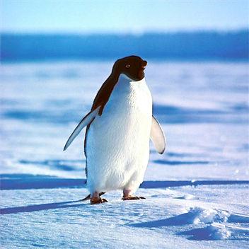 Penguin-ice.jpg