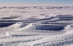 Windswept Ice Fields