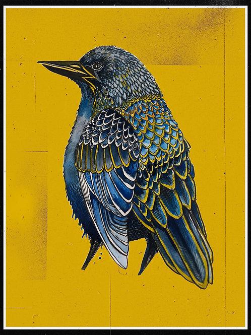 bird in pen and ink