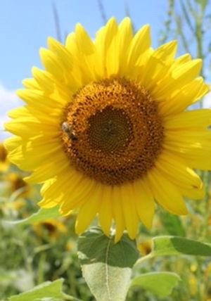 with bee.JPG