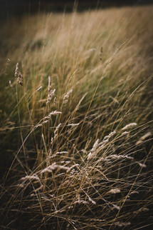 EleanorChurch_grasses.jpg