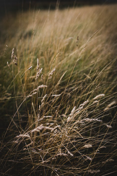 Late Summer, Long Grasses