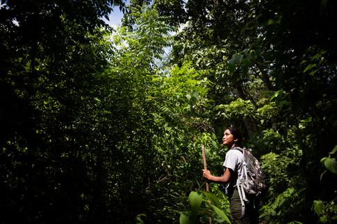 Manju - Jungle Guide