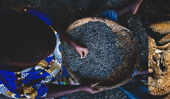 Rose sorting sunflower seeds, Malawi