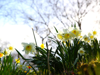 Spring has sprung in Roshven!
