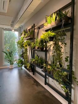 Plant Wall