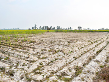Soil Salinity: Repairing the world's agricultural soils.