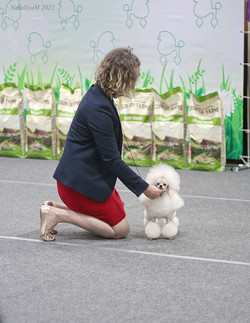 National Poodle Club Show, May 2021